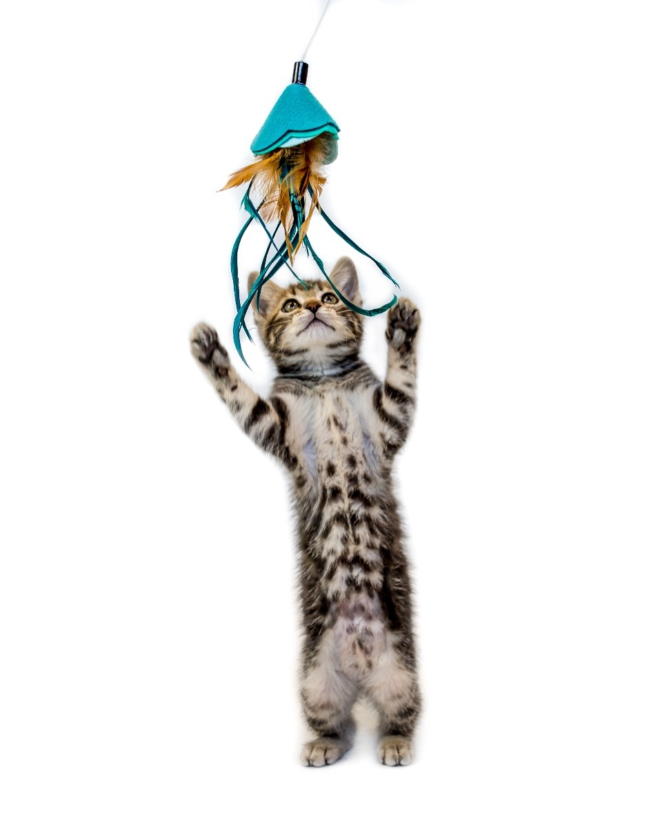 We carry cat toys too!