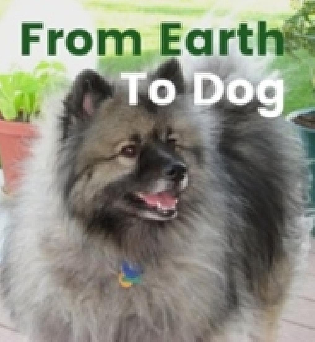 From Earth to Dog