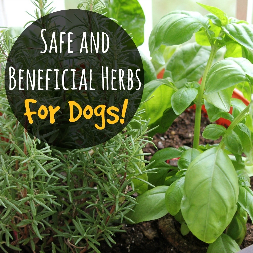 remedial herbs for dogs