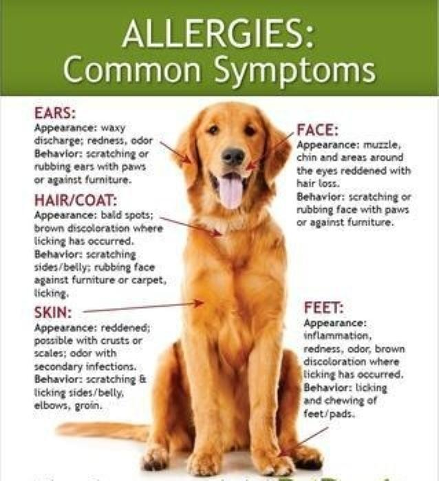 allergies or intolerance?